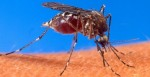 West Nile Virus Claims First County Resident
