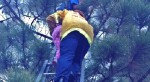 Four-Year-Old Rescued From Pine Tree