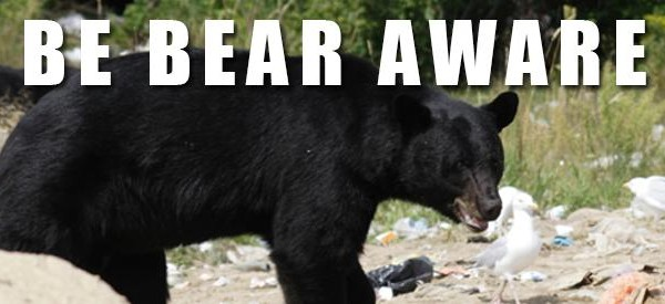 Be Bear Aware: Living With Wildlife In The San Bernardino National Forest