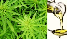 Potentially Hazardous Cannabis Extraction Lab Out Of Business