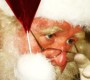 Schedule Free Rotary Visits When Santa Comes To Big Bear Valley
