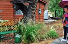 Sierra Club Presents 15th Annual Xeriscape Garden Tour July 15