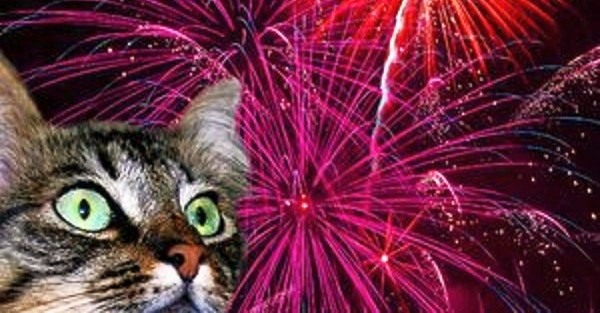 FIREWORKS Cat